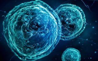 Базофилы повышены в крови, о чем это говорит? Причины повышения у взрослых и детей