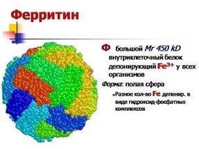 Ферритин в крови: значение, нормы, повышен, понижен, анализ