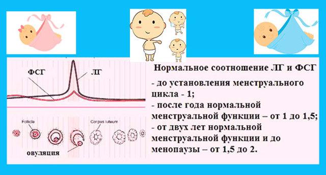 Лютеинизирующий гормон ЛГ норма у женщин по возрасту (таблица)
