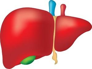 Липоматоз печени: причины, симптомы, диагностика и лечение