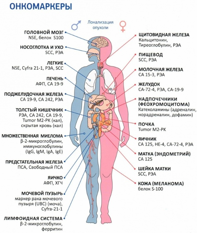 Что показывает анализ крови на онкомаркеры, цена, какие бывают и сколько делается процедура