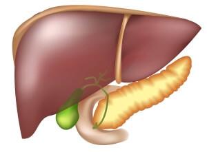 Трансаминазы (АЛТ и АСТ): что это, норма в крови таблица нормативов