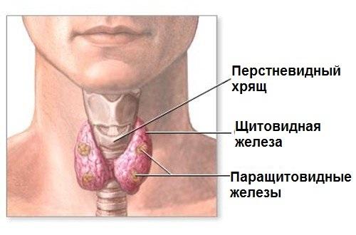 ТТГ в норме Т4 повышен, Т4 повышен ТТГ в норме: что это значит, причины, симптомы, лечение