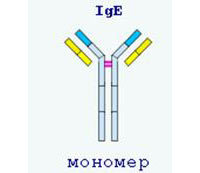 Анализ крови на иммуноглобулин Е: что показывает у взрослых и детей?
