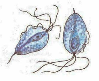 Уретрит у женщин: симптомы и лечение препаратами, виды (хронический, неспецифический, трихомонадный, неинфекционный, гонорейный, бактериальный, острый, кандидозный, хламидийный, атрофический)