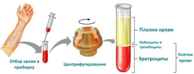 Пониженный гематокрит в крови: что это значит, причины и лечение низкого гематокрита