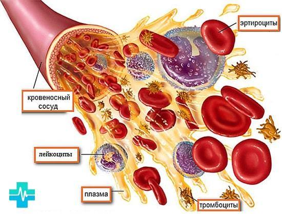 PLT (тромбоциты) в анализе крови: что это, норма у детей и взрослых