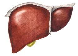Можно ли есть арбуз при циррозе печени, как производится очищение печени при помощи арбуза