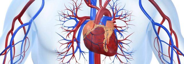 Сколько живут люди с пороком сердца: продолжительность жизни при заболевании, советы кардиолога