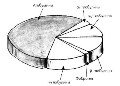 Альбумин: что это такое? его функции и виды, показания к проведению анализа