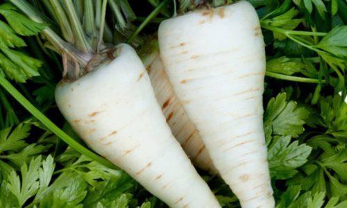 Петрушка при цистите: как принимать, рецепты отваров и настоев из корня и семян петрушки.