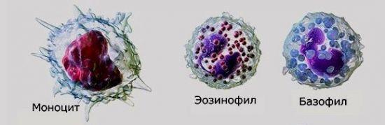 Mid и mxd в общем анализе крови: что это такое, и каково их клиническое значение?