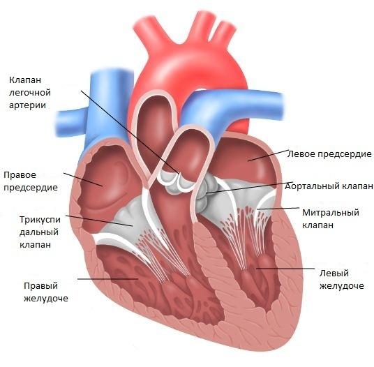 Порок сердца — Врожденные и приобретенные пороки, основные симптомы и методы лечения