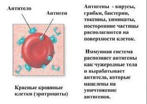Можно ли рожать с гепатитом С: какие риски для матери и плода
