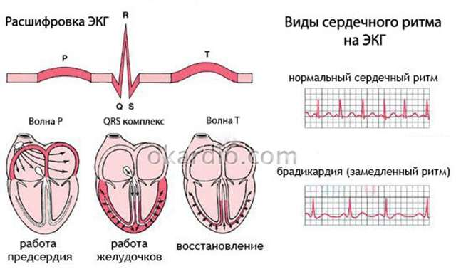 Какой должен быть пульс у человека — Показатели нормы пульса здорового человека, таблица возрастов