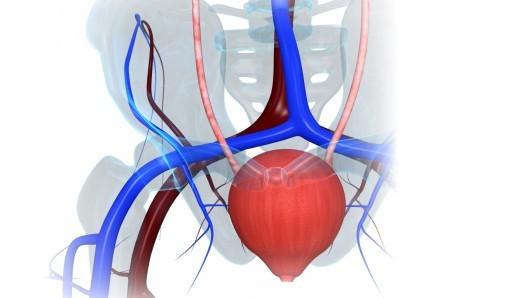 Атония мочевого пузыря: что это, симптомы и лечение