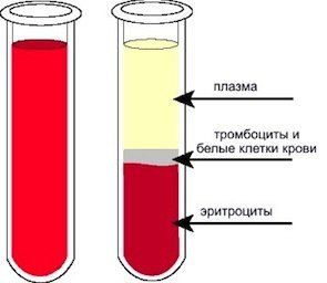 Что такое плазма крови: состав, функции и для чего нужна плазма